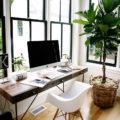 dicas-plantas-para-decorar-o-escritorio