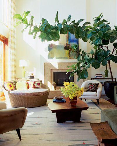 plantas-na-decoração